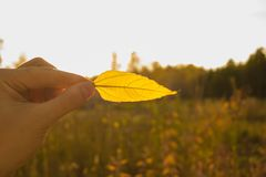 Hand holds yellow leaf on autumn field and sky background. Autumn season composition concept. Hand holding yellow leaf on field background. Autumn time season stock photos