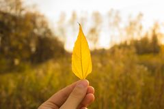 Hand holds yellow leaf on autumn field and sky background. Autumn season composition in forest. Hand holding yellow leaf on field background. Autumn time season stock photos