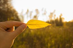 Hand holds yellow leaf on autumn field and sky background. Autumn season composition in forest. Hand holding yellow leaf on field background. Autumn time season royalty free stock photography