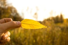Hand holds yellow leaf on autumn field and sky background. Autumn season composition in forest. Hand holding yellow leaf on field background. Autumn time season stock photography