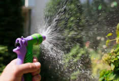 Hand with hose sprinkle watering plants in the garden.  stock photography