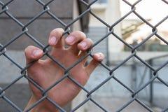 Hand i buren Arkivfoto