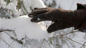 Hand i den varma vinterhandsken som trycker på ny fluffig snö på granträdfilialer stock video