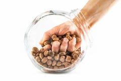 Hand i en glass krus med hasselnötter som isoleras på en vit Royaltyfria Bilder