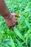 Hand i höstgräs royaltyfri foto