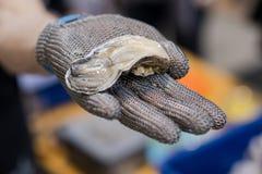Hand i metallhandsken som erbjuder en nytt öppnad ostron arkivfoto