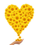 Hand idea with sunflower heart image. Royalty Free Stock Image