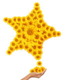 Hand idea with sunflower star image. Stock Photography