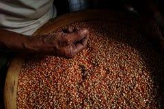 Hand im Mais-Samen, niedrige Beleuchtung lizenzfreie stockfotografie