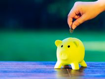 Hand inserting a coin into green piggy bank - ecology savings co. Ncept Stock Image
