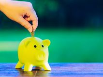 Hand inserting a coin into green piggy bank. Ecology savings concept Stock Photos