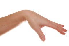 Hand isolated on white. Background stock photo