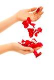 hand isolerad rose s kvinna för petalsred Arkivbilder