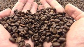 hand 4k med grillade kaffebönor Friskhetingrediens för att förbereda kaffe stock video