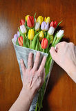 Hand keeps a bouquet of tulips Royalty Free Stock Images