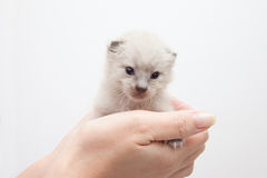 Hand and kitten Stock Image