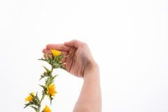 Hand in Kontakt mit Blumen stockfoto