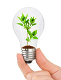 Hand with lamp and plant Stock Photography