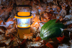 Hand lantern with iced leaves Stock Image