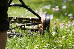 Hand lawn mower. Close up in meadow with daisies Stock Image
