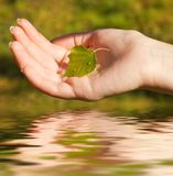 Hand with a leaf Stock Photos