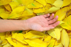 Hand on leafs Royalty Free Stock Photography