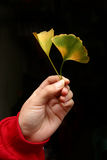 Hand and leaves. Yellow leaves in a female hand Royalty Free Stock Images