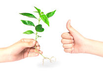 Hand like giving a tree. On white background Royalty Free Stock Photography