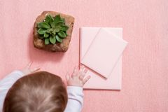 The hand of the little baby. A cute baby. Pink notebook, cactus succulent on a pink background. minimal style. mock-up valentine. Curious, naughty kid stock photos