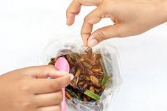 Hand of little girl holding a fried crickets. Close up insect food.selective focus. Hand of little girl holding a fried crickets. Close up insect food stock image