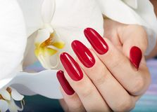 Hand with long artificial manicured nails and orchid flower. Hand with long artificial manicured nails colored with red nail polish and white orchid flower Royalty Free Stock Image