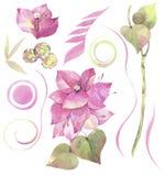 Hand målad vattenfärgillustration Blom- uppsättning med blommor av bougainvillean och abstrakta beståndsdelar stock illustrationer
