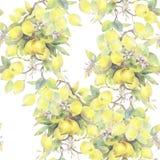 Hand målad vattenfärgillustration sömlös modell med beståndsdelar för citronträdfilial stock illustrationer