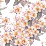 Hand målad vattenfärgillustration Sömlös modell med blommor av plumeria stock illustrationer