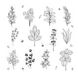 Hand made set of field plants and herbs. For design Stock Image