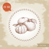 Hand made sketch mandarin composition with leafs and peeled mandarin.   Royalty Free Stock Images