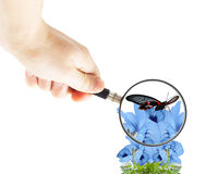 Hand with magnifying glass and butterfly Royalty Free Stock Photography