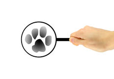 Hand with a magnifying glass icon animal prints Stock Photos