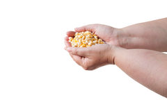 Hand with maize Stock Photography