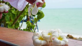 Hand make floral arrangement of tropical flowers plumeria on the terrace stock video