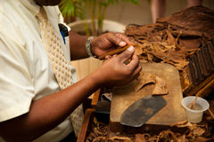 Hand making cigars from tobacco leaves, traditional product of C. Uba royalty free stock photography