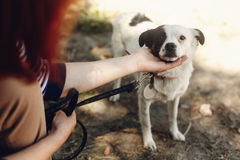 Hand of man caress little scared dog from shelter posing outside. In sunny park, adoption concept Stock Images