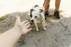 Hand of man caress little scared dog from shelter posing outside. In sunny park, adoption concept Royalty Free Stock Photos