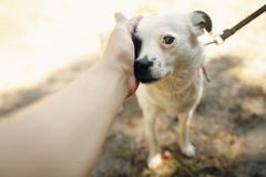 Hand of man caress little scared dog from shelter posing outside. In sunny park, adoption concept Stock Image