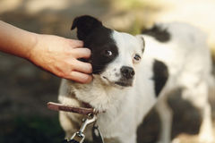 Hand of man caress little scared dog from shelter posing outside. In sunny park, adoption concept Royalty Free Stock Photography
