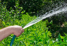 Hand of man holding a hose and watering the flowers Royalty Free Stock Images