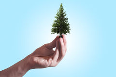 A hand of a man holding a tree between the fingers Stock Image
