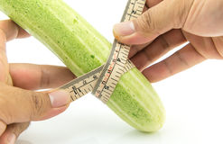 Hand man measuring size of long cucumber. Isolated on white Royalty Free Stock Images