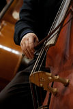 Hand of a man playing the contrabass Stock Image