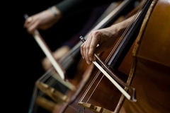 Hand of a man playing the contrabass Stock Images